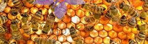 رایحه مشک، عنبر و رایحههای حیوانی - MUSK, AMBER, ANIMALIC