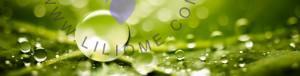 گروه بویایی آروماتیک عطر و ادکلن - Aromatic Olfactory Group