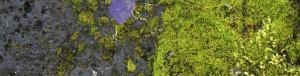 گروه بویایی مدیترانه ای عطر و ادکلن - chypre Olfactory group