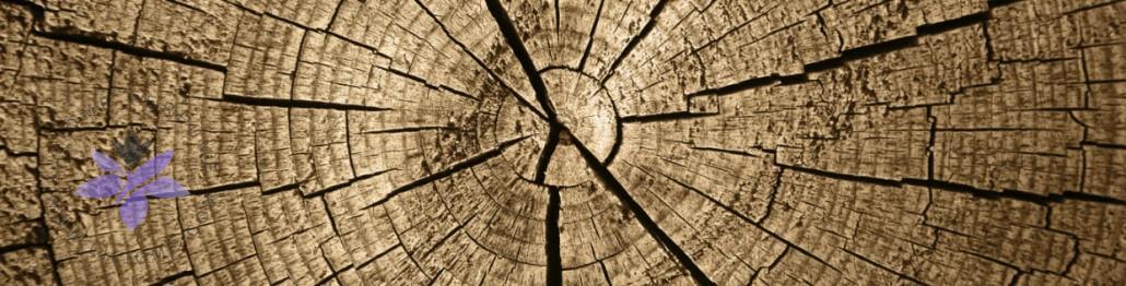 گروه بویایی چوبی عطر و ادکلن - woody olfactory group
