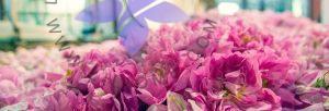 عطر ادکلن لیلیوم- اصطلاحات رایج در عطر و ادکلن