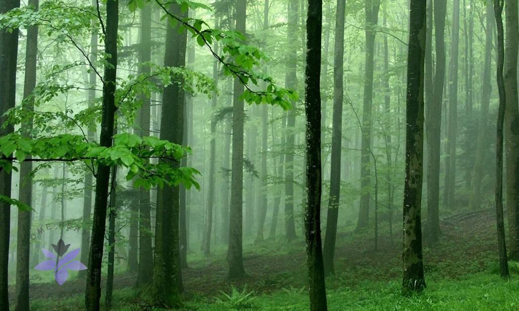 رایحه چوب و خزه عطر و ادکلن یا ن چوبی - WOODS Note